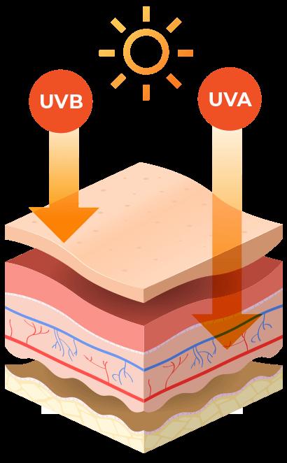 UV Index Diagram Image
